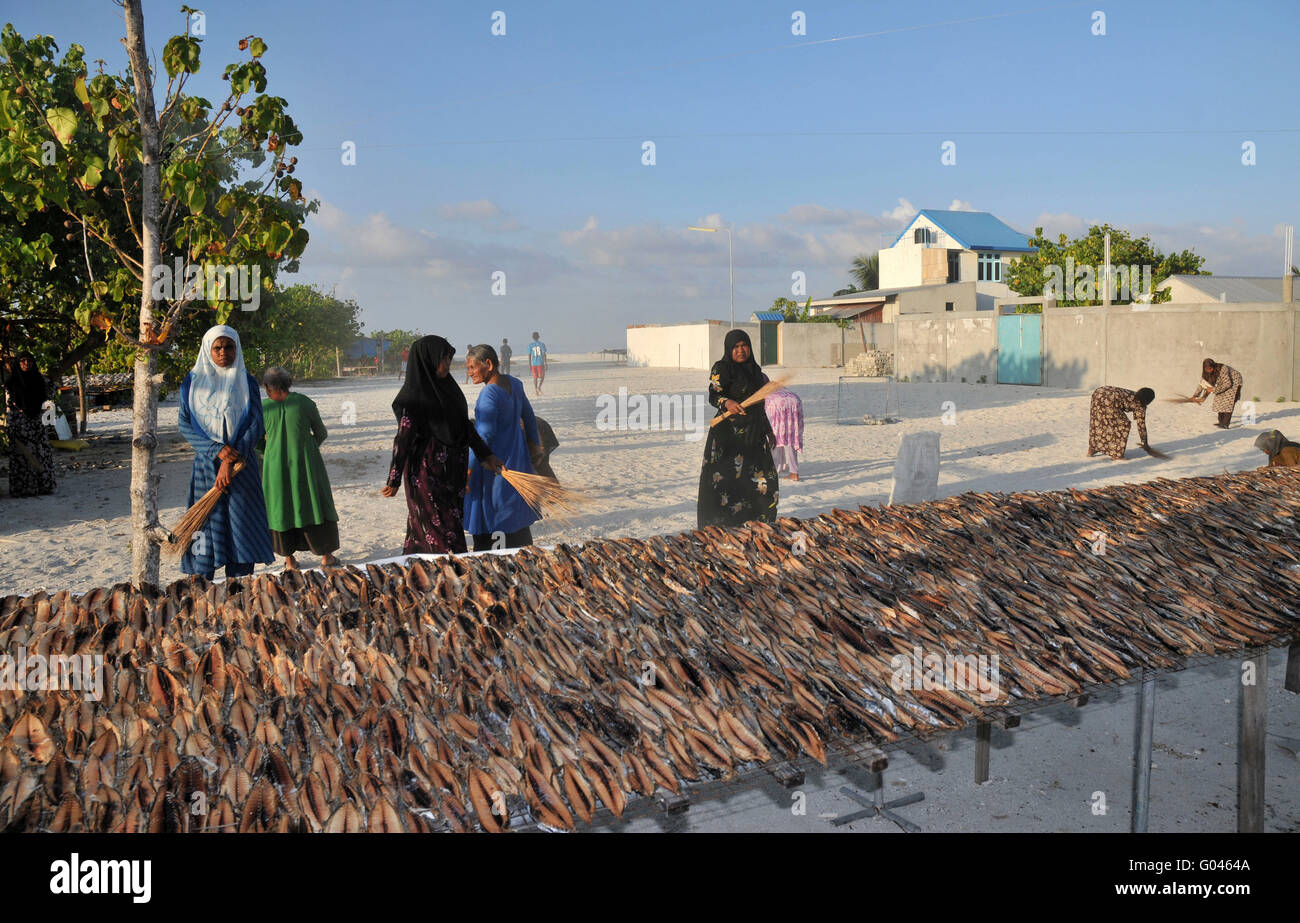 Fish drying, Dhiggaru, Meemu Atoll, Maledives - Stock Image