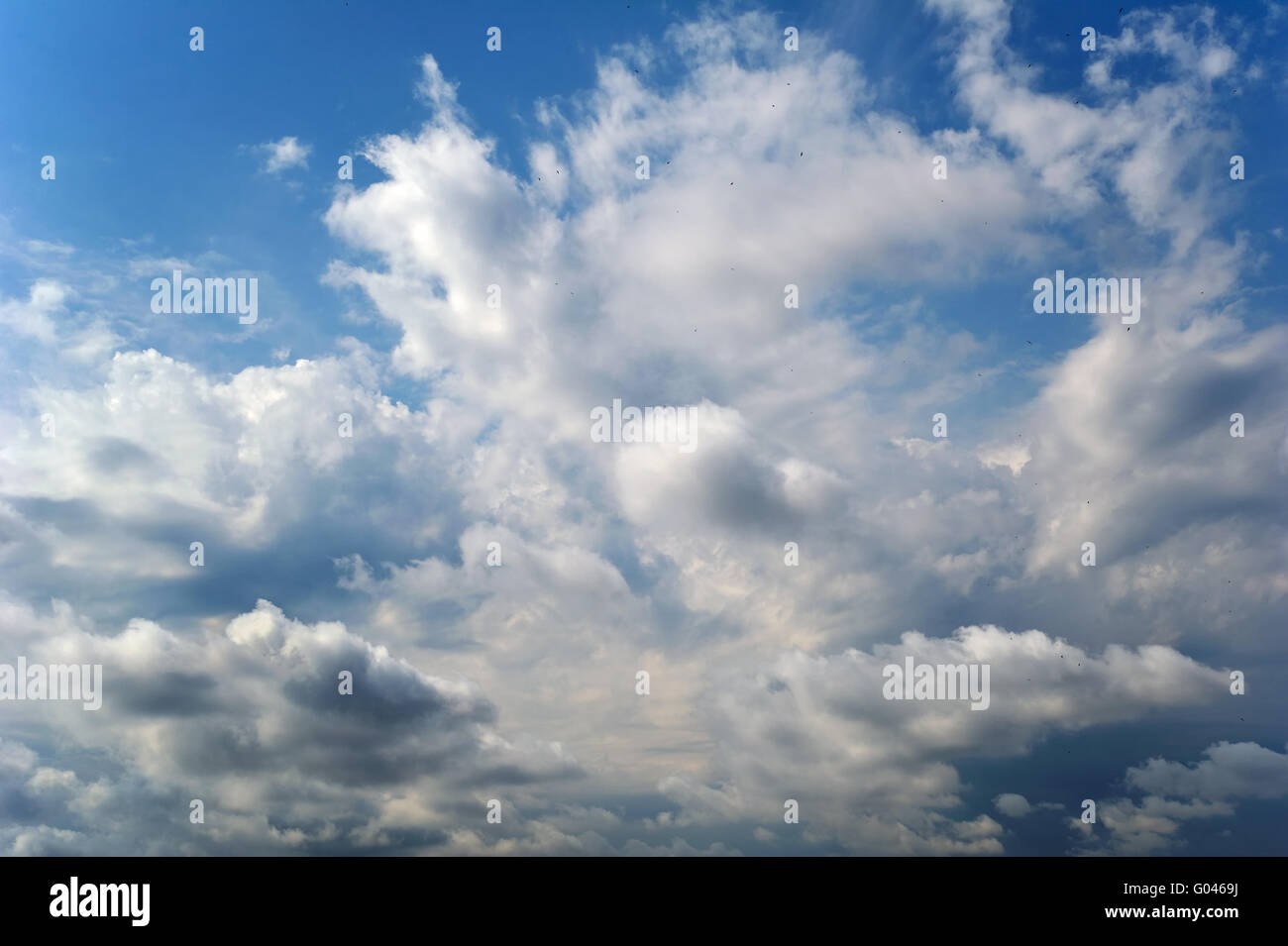 Cloudy sky with flying birds - Stock Image
