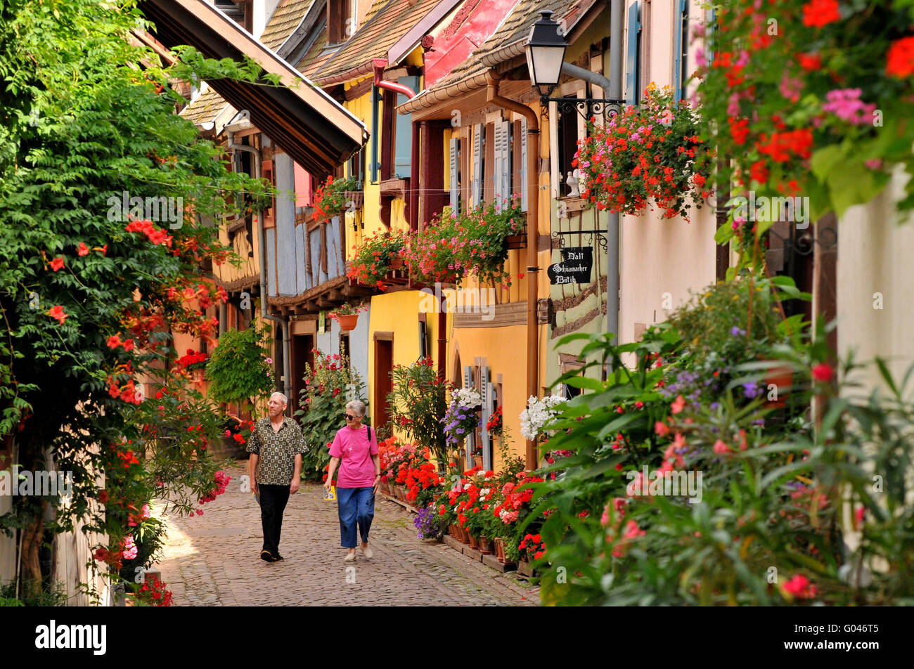 Half-timbered houses, old town, Rue du Rempart, Eguisheim, Alsace, France / half-timber house - Stock Image