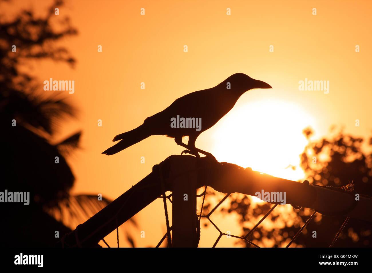 Raven Sunset - Stock Image