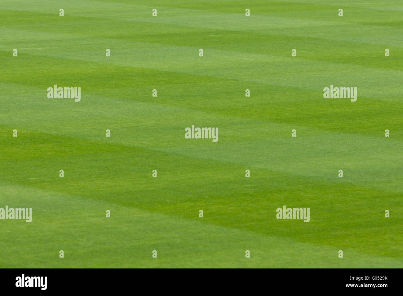 Green grass in a stadium or sports field - Stock Image