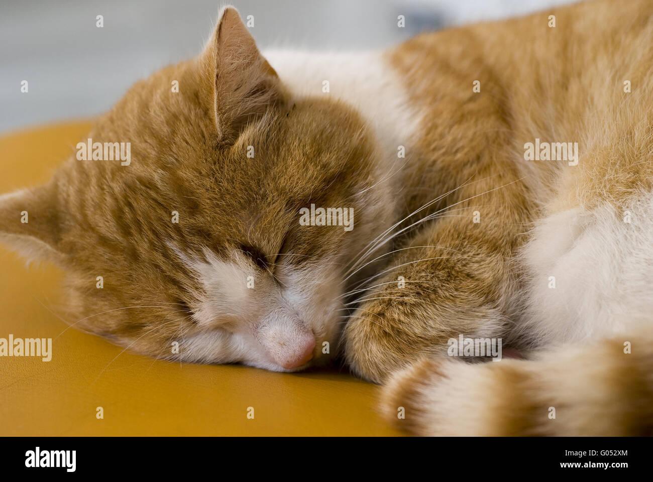 To cat in the deep sleep Stock Photo
