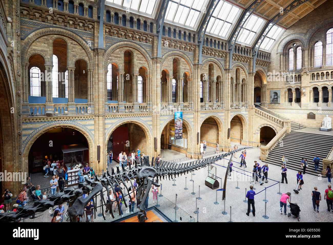 Natural History Museum interior with people and tourists and dinosaur skeleton in London - Stock Image