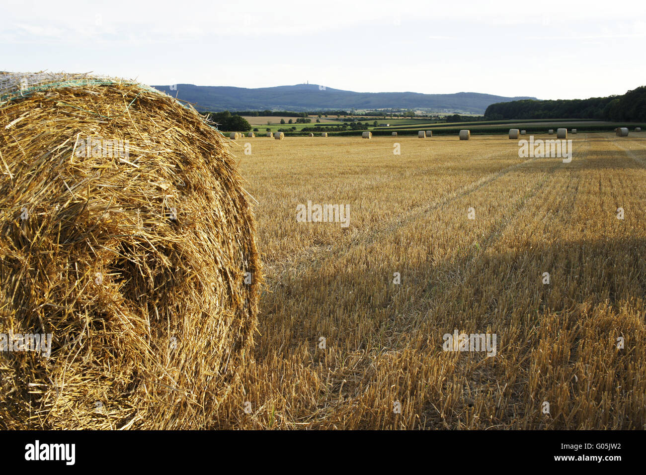 after harvesting Stock Photo