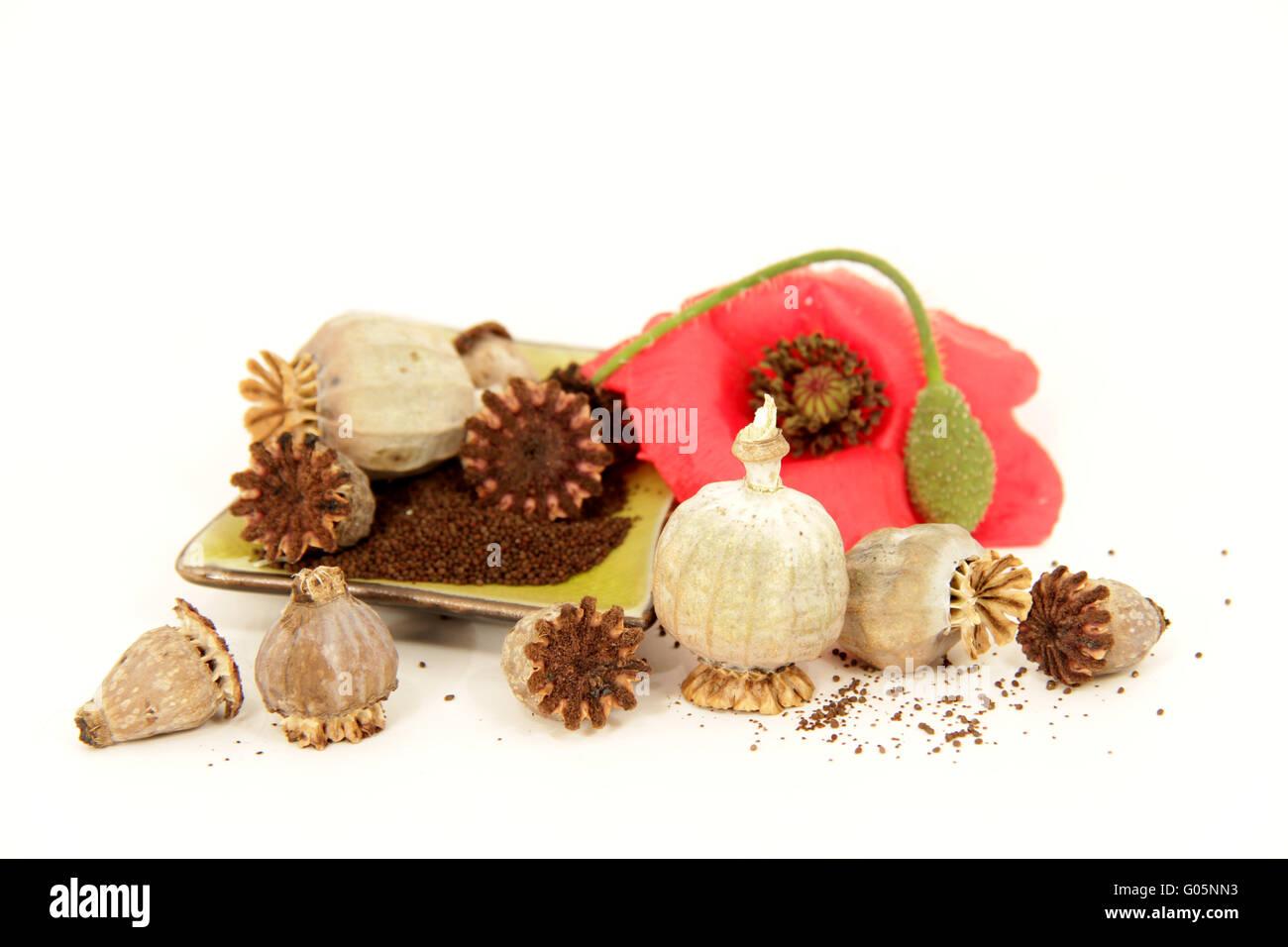 poppy seeds, isolated on white - Stock Image