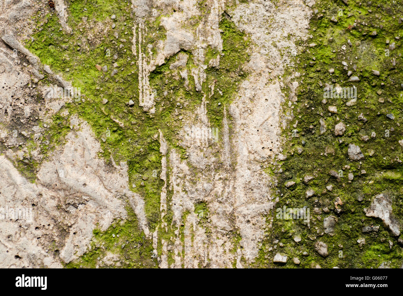 Grunge textured concrete sidewalk with green mould - Stock Image