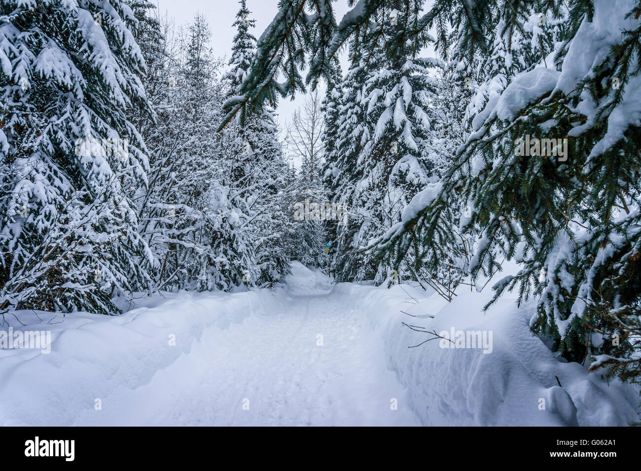 The wonders of a winter landscape with snow covered trees at Sun Peaks village in the Shuswap Highlands of beautiful - Stock Image