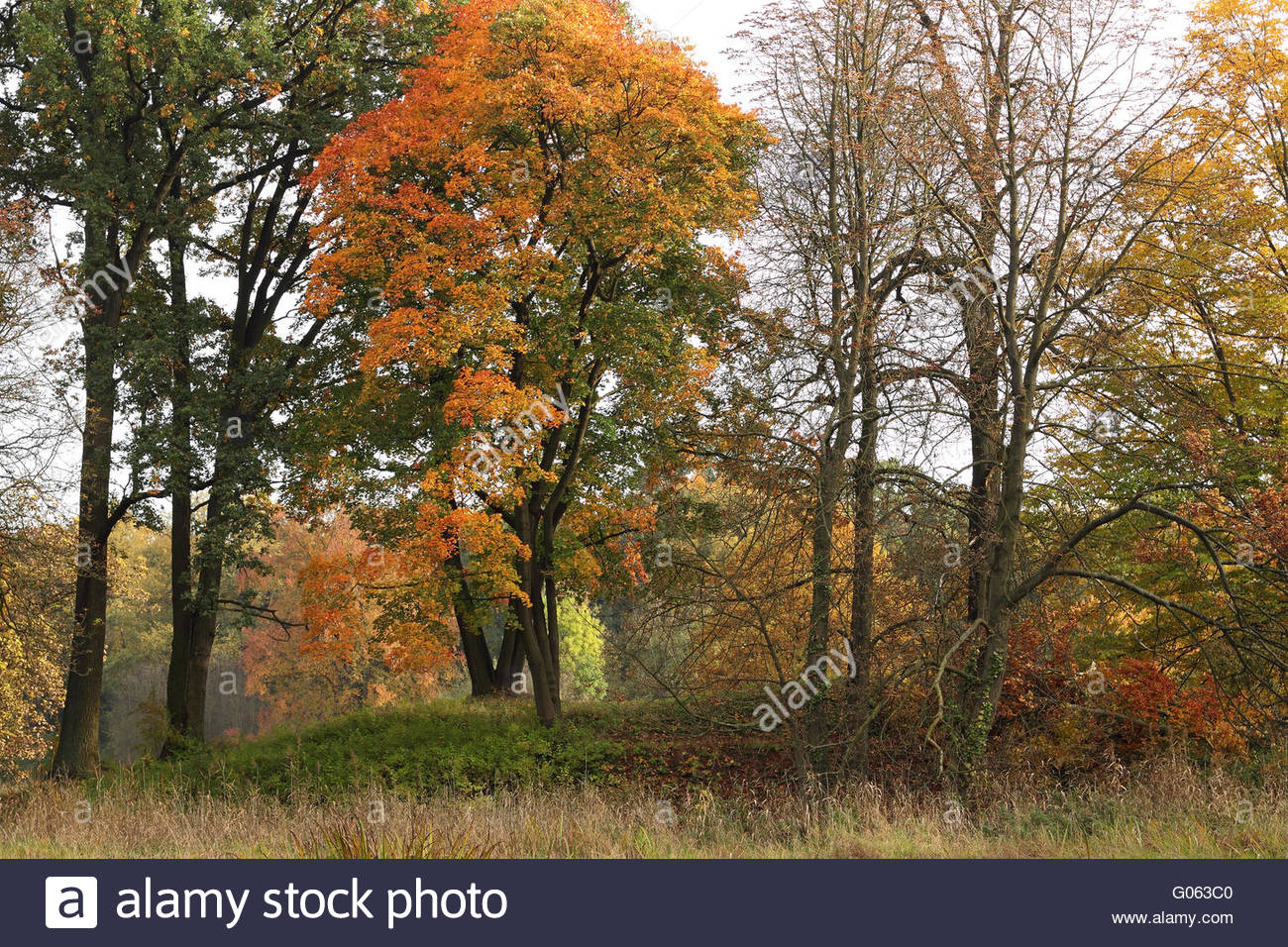 Autumn evening in the park - Stock Image