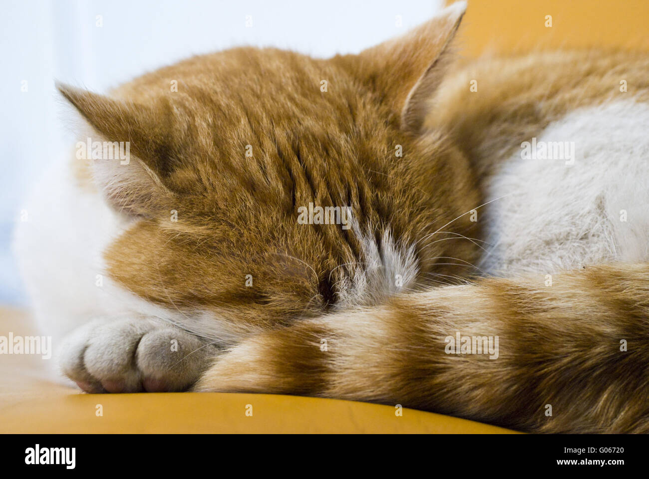 To cat in the deep sleep - Stock Image
