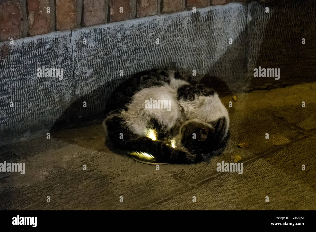 Stray cat lying on a recessed light for warmth in Tehran, Iran. - Stock Image