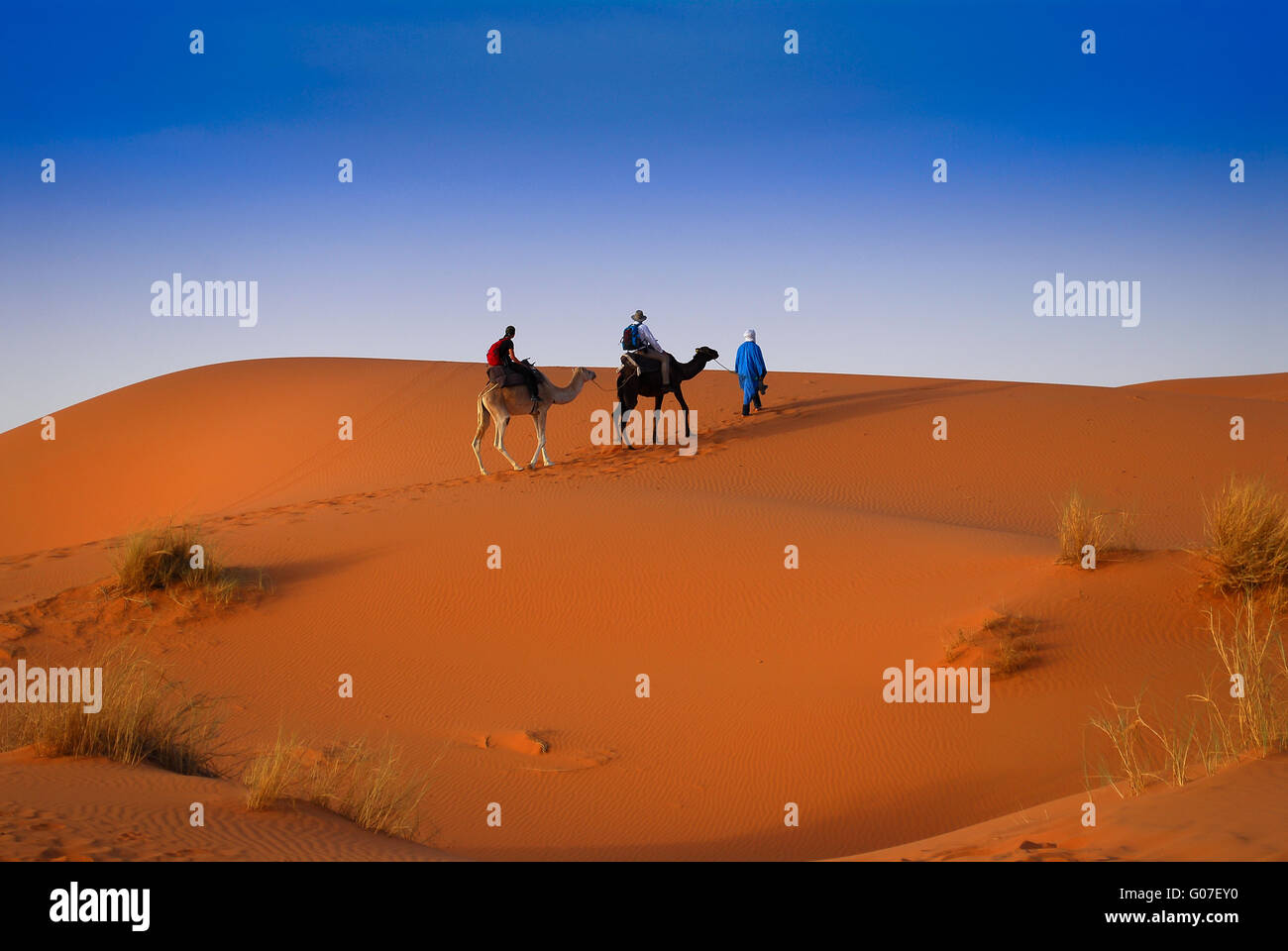 Dromader caravan crossing red sands of Sahara Dese - Stock Image