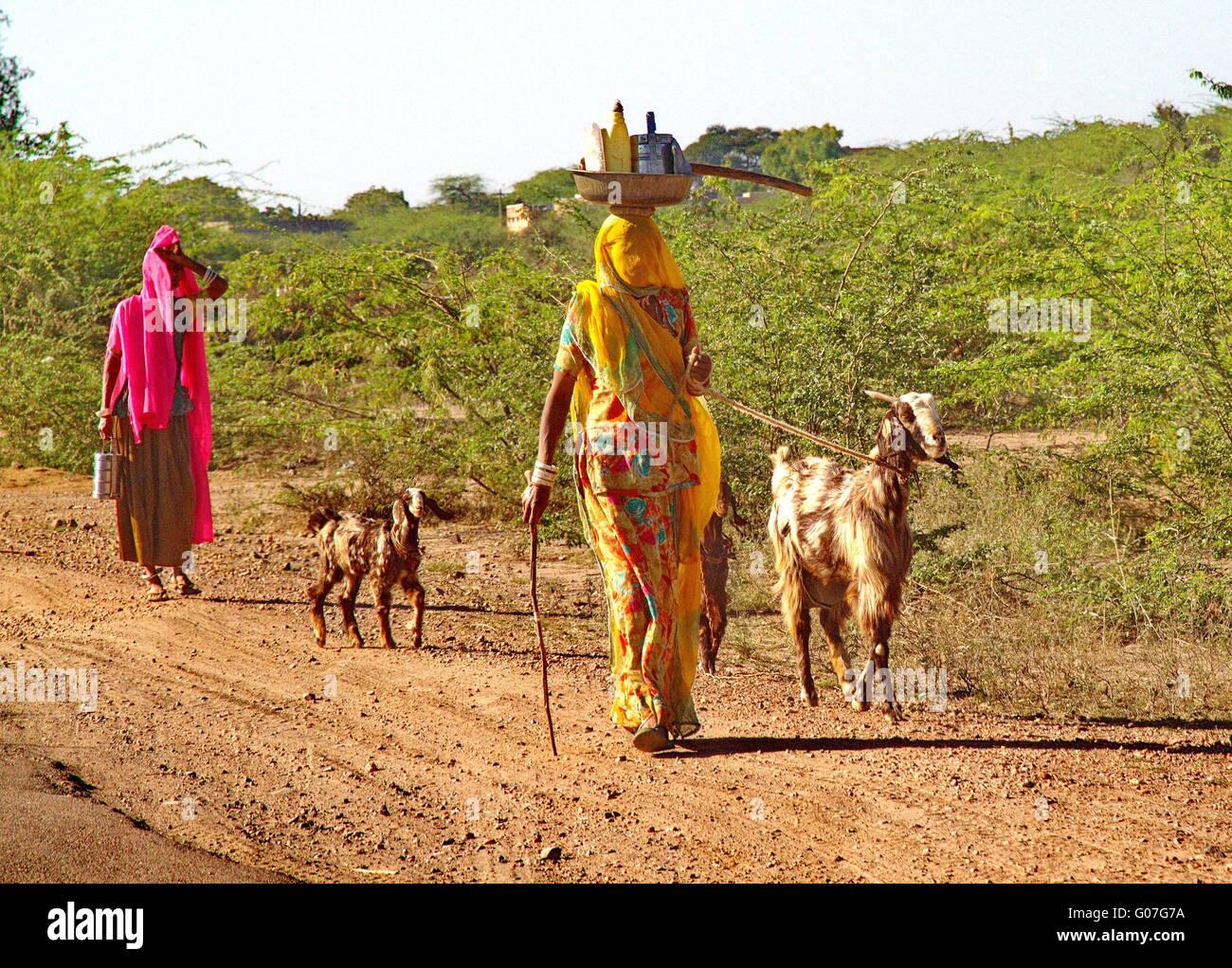Indian goat women Stock Photo