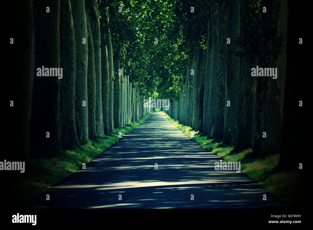 avenue Stock Photo