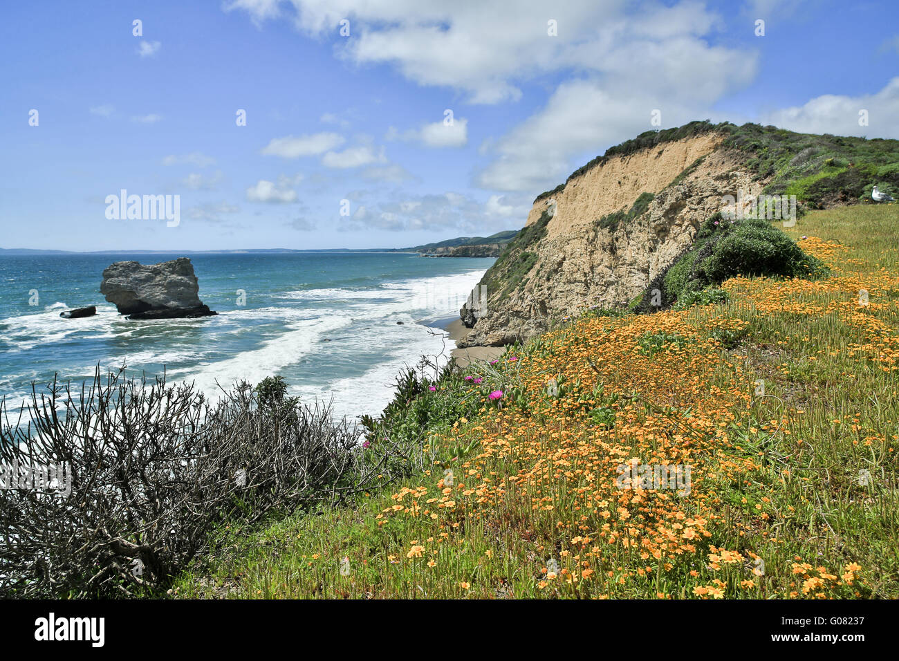 Pacific Coastline near Arch Rock/Bear Valley trail in Point Reyes National Seashore - Stock Image