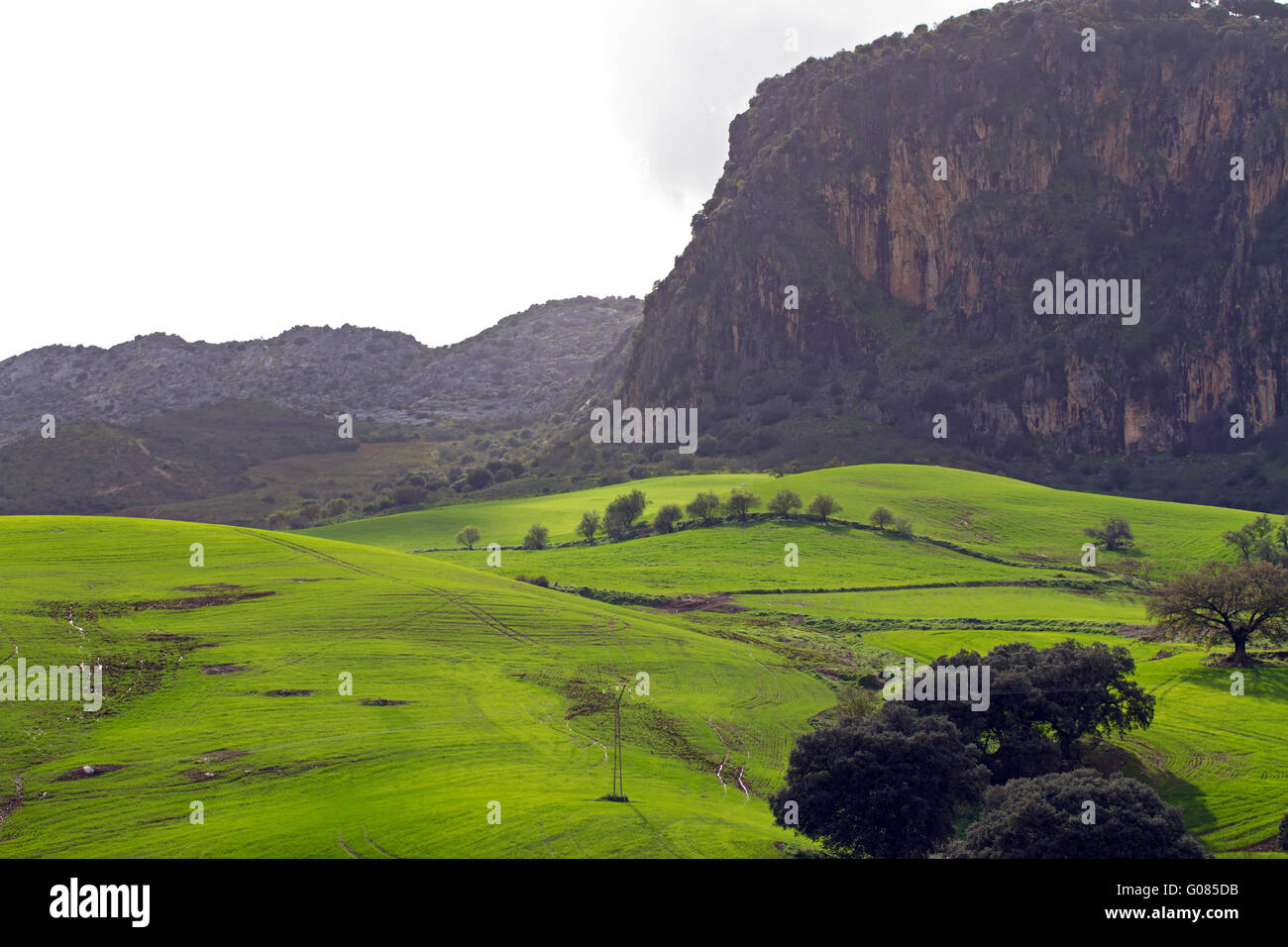 Fields in Andalusia Stock Photo