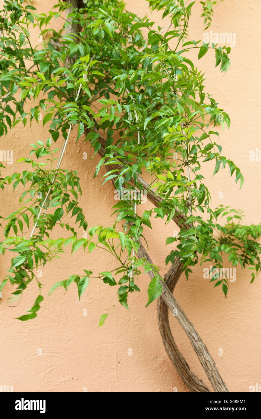 Plants Growing On House Wall Stock Photos & Plants Growing On House ...