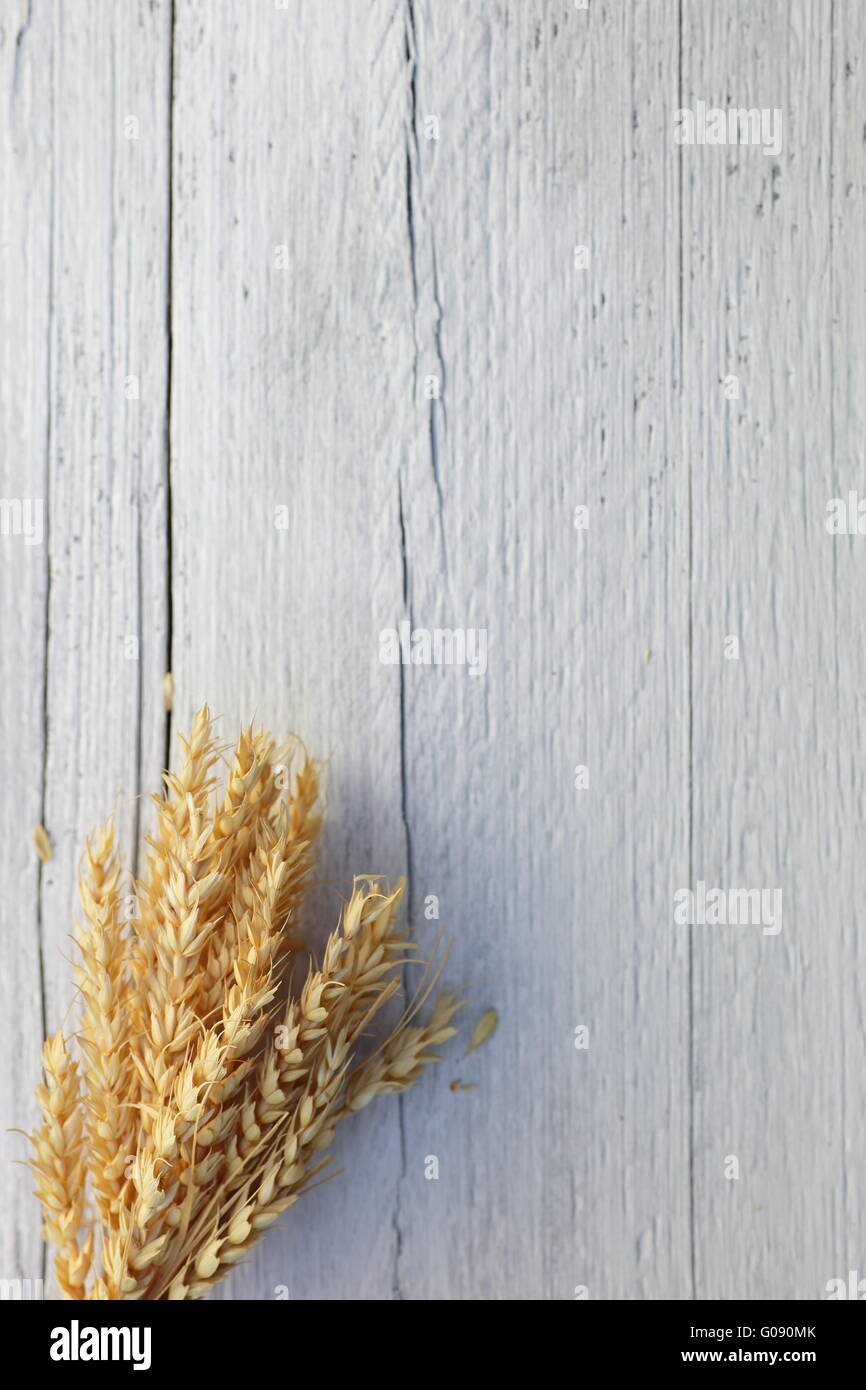 Bunch of ripe wheat on a white wood background - Stock Image