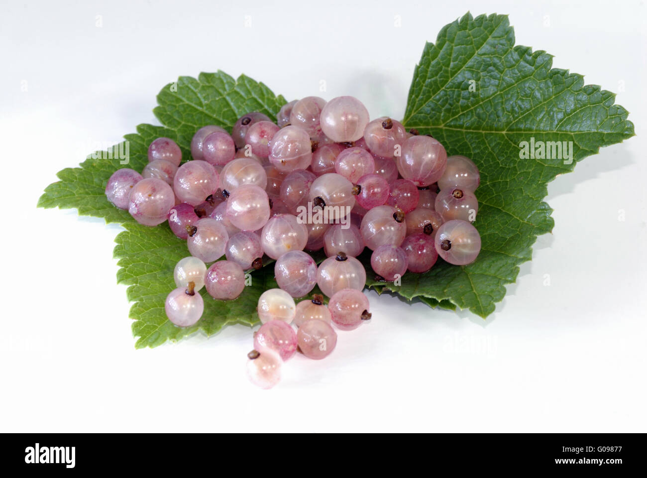 white currants with leafs - Stock Image