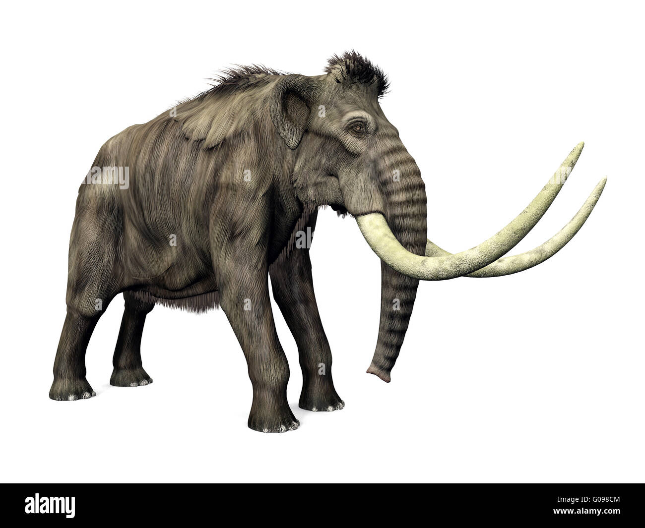 Mammoth - Stock Image