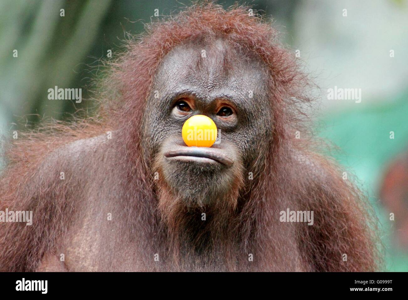 Monkey - Stock Image