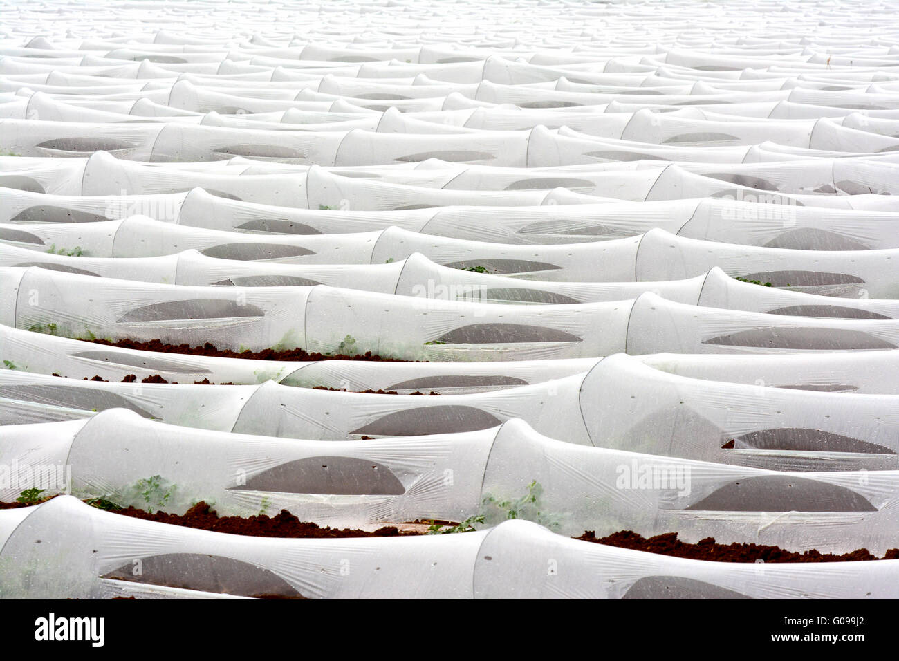 Field of greenhouses - Stock Image