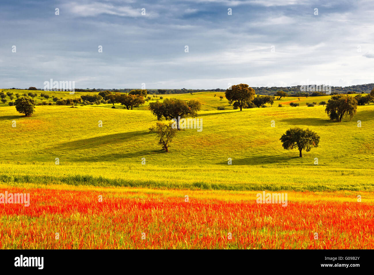 Greenfield at the beginning of spring. - Stock Image