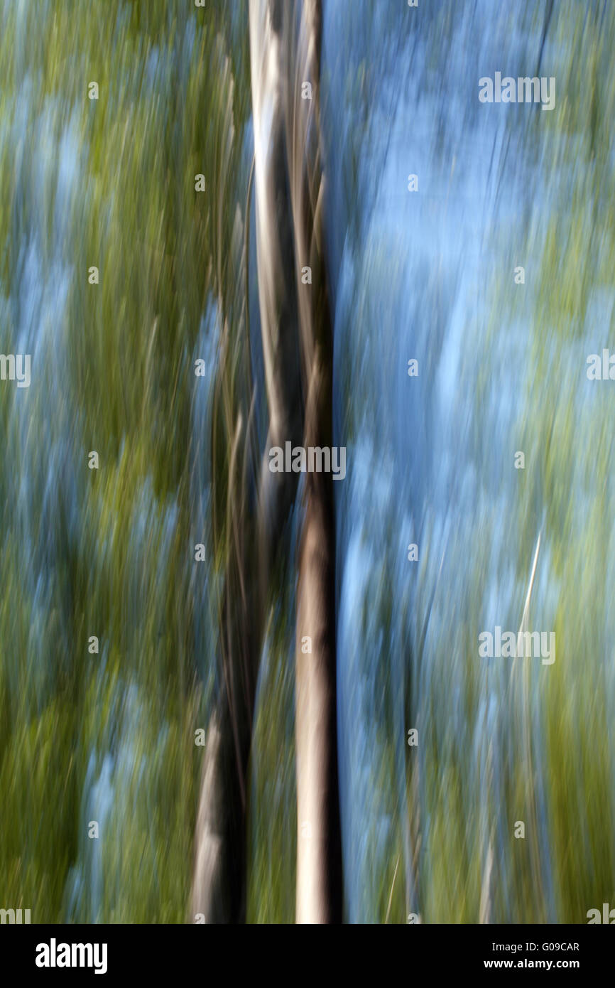 Blurred Trees 007 - Stock Image