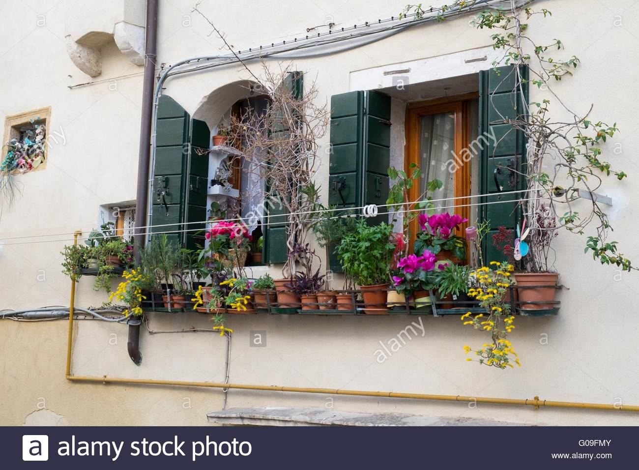 Pots plants adorning a window box Venice, Italy, April - Stock Image