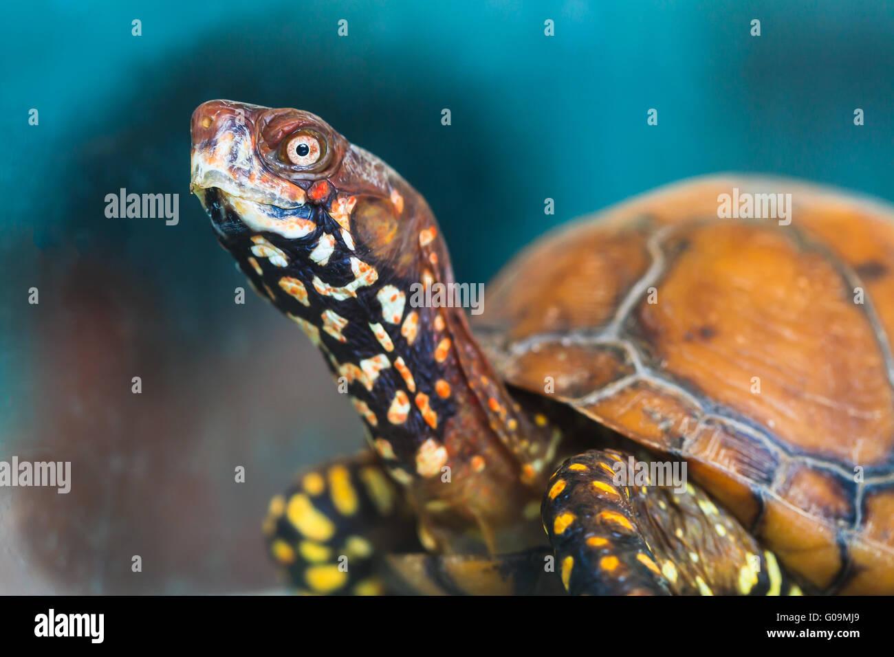 Tortoise_AP - Stock Image