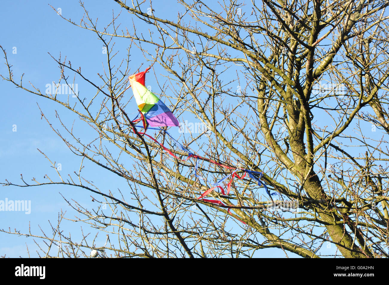 A tree top- early spring sunshine - a child's kite snagged - shaped by chance like a brilliant coloured bird - Stock Image