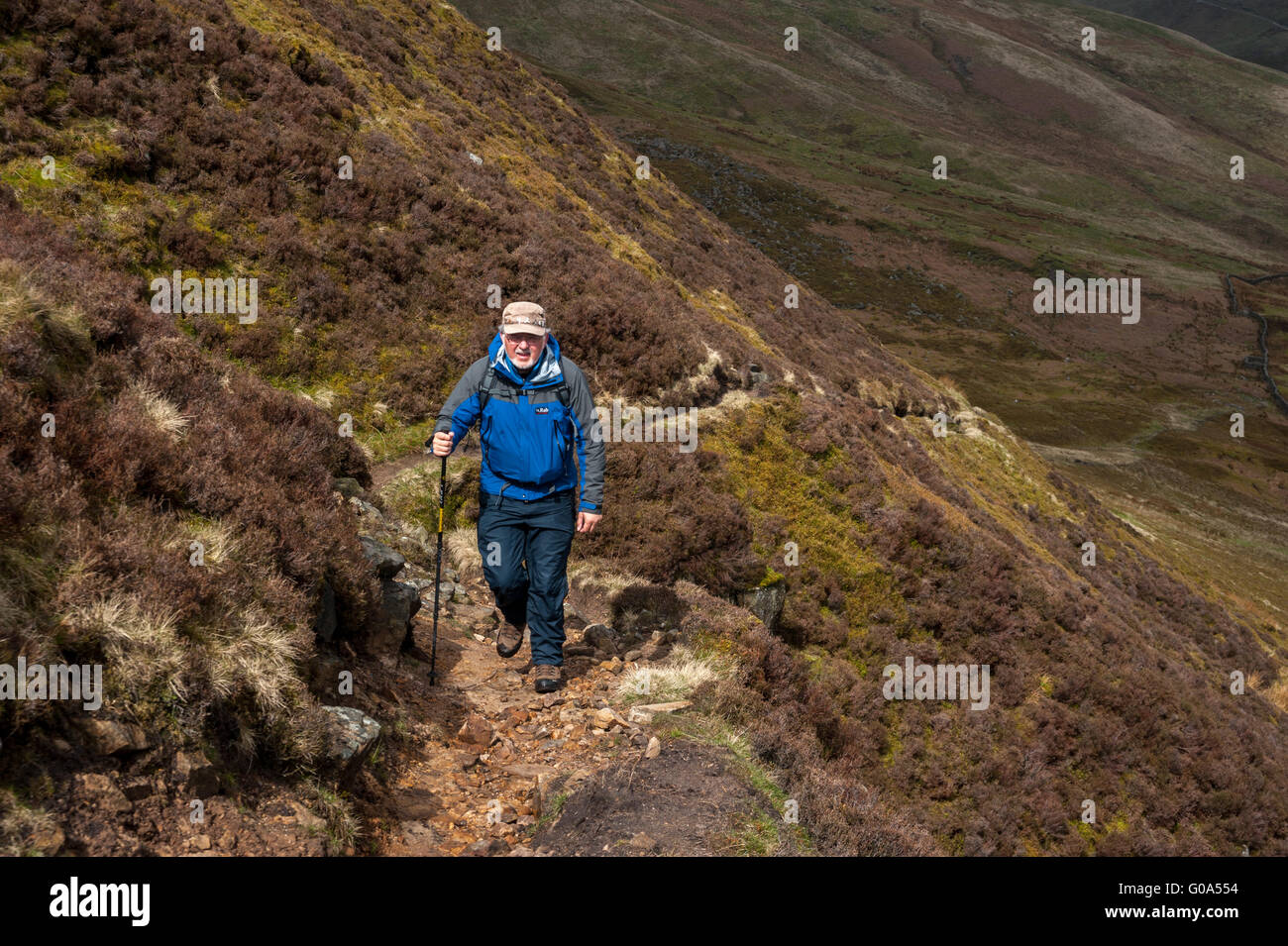 A hillwalker on Ouster Rake The Brennand valley Forest of Bowland Stock Photo