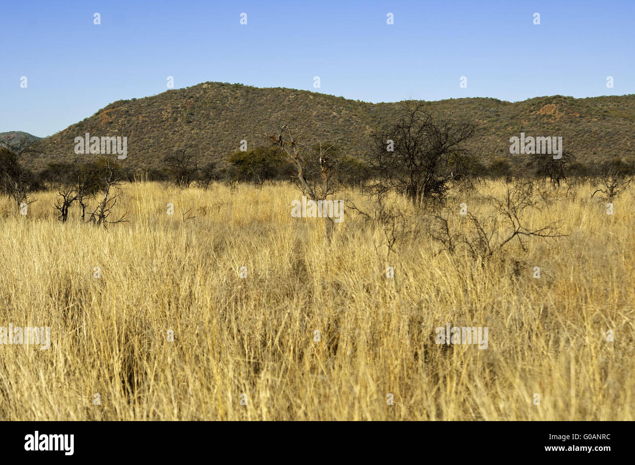 African savanna landscape, South Africa - Stock Image