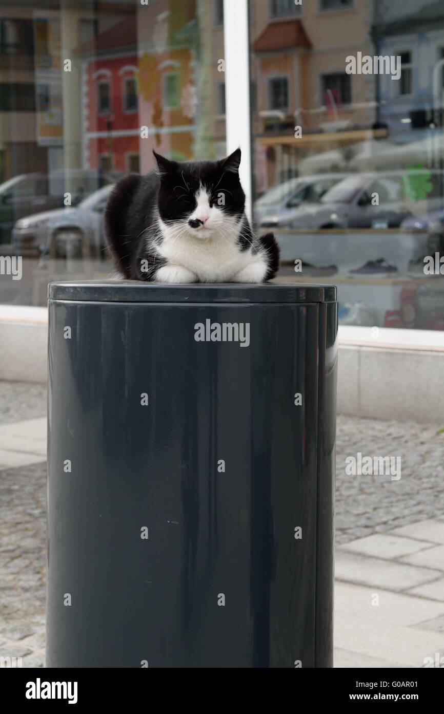 Domestic cat on the garbage can in the middle of t Stock Photo