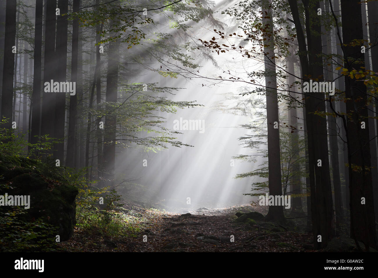 Light and shadow - Stock Image