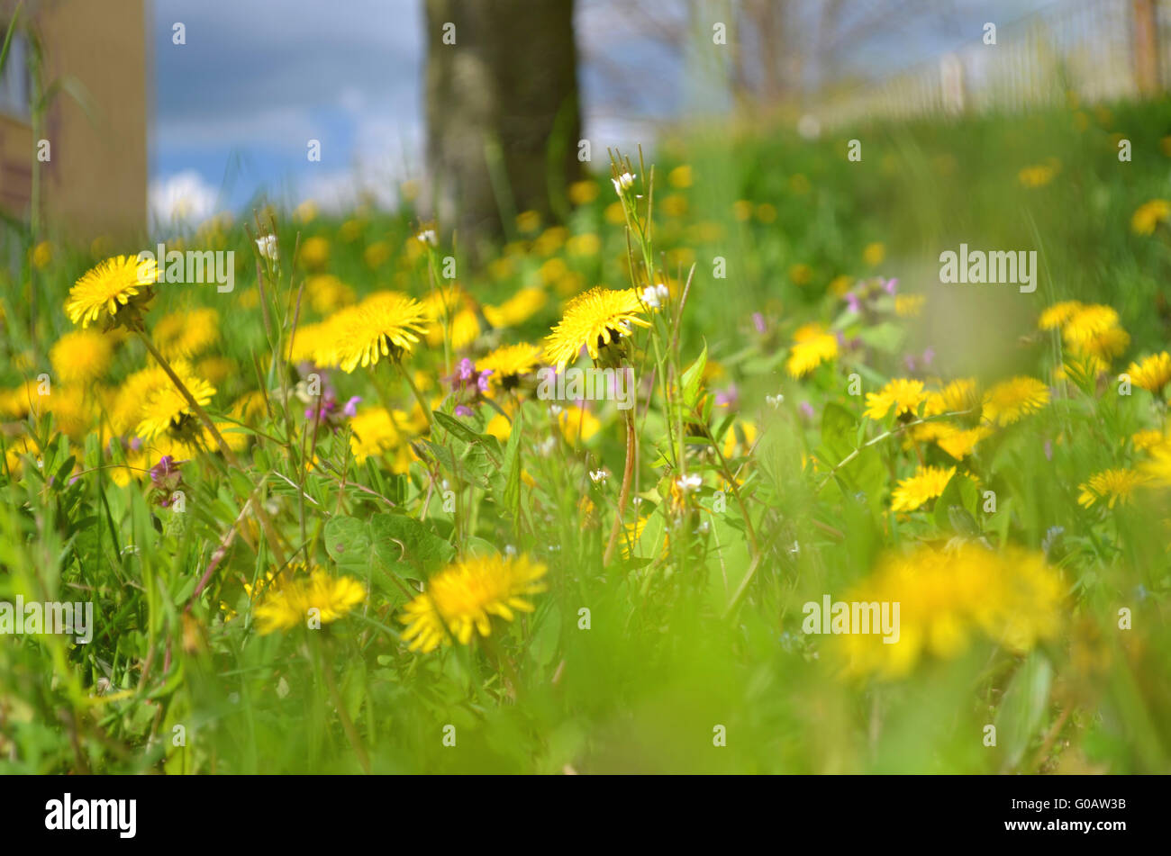 spring time in Germany - Stock Image