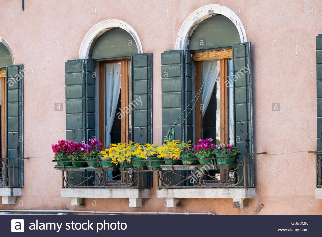Venetian window box with succulents and cyclamen Venice, Italy, April - Stock Image