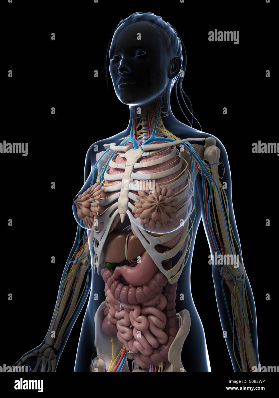 Großartig Anatomie Des Kriechgang Bilder - Anatomie Von Menschlichen ...
