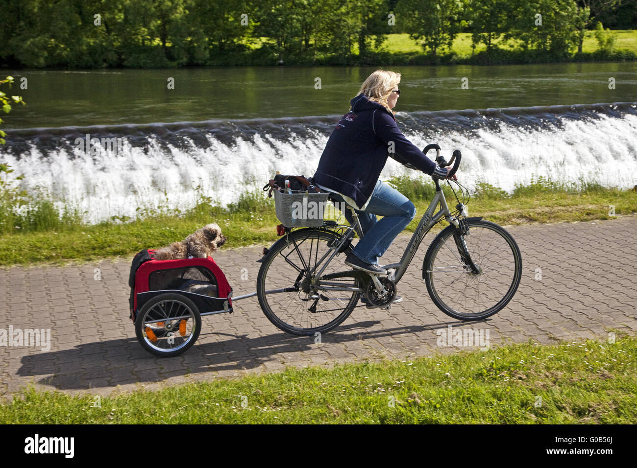 A cyclist with her dog in the bike trailer, Witten - Stock Image