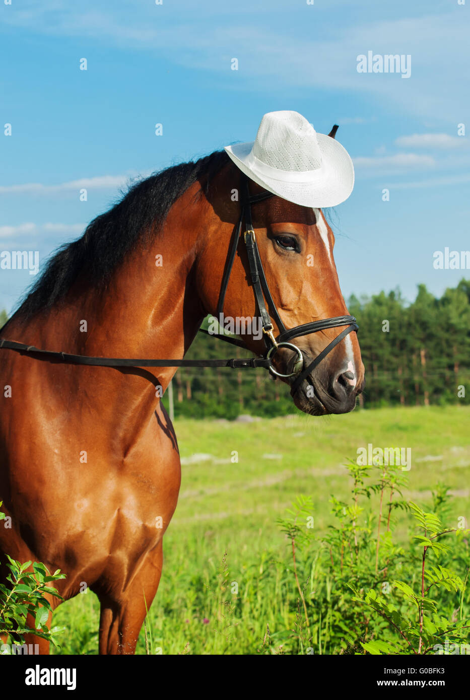 portrait of bay horse with hat Stock Photo