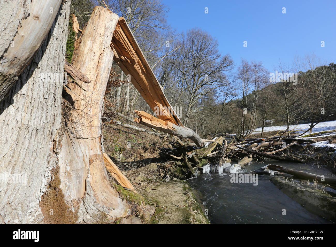 Bent Tree Stock Photo