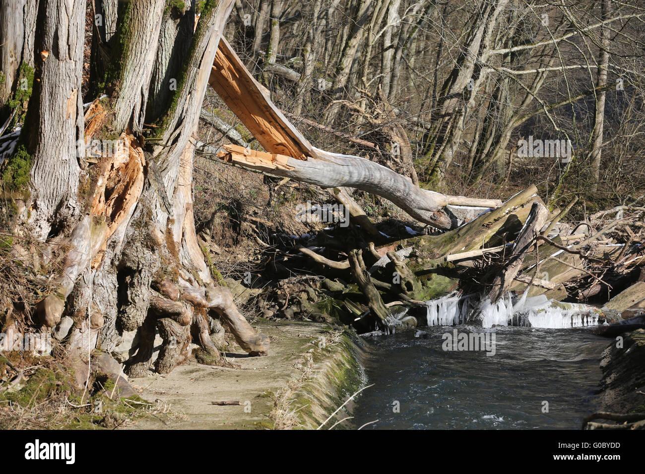 Windbreakage in a Creek Stock Photo
