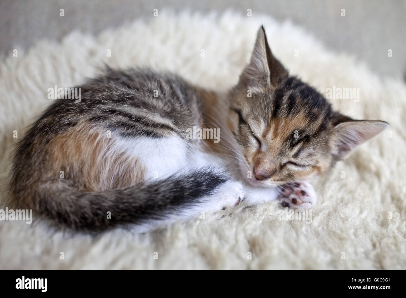 Sleeping kitten - Stock Image