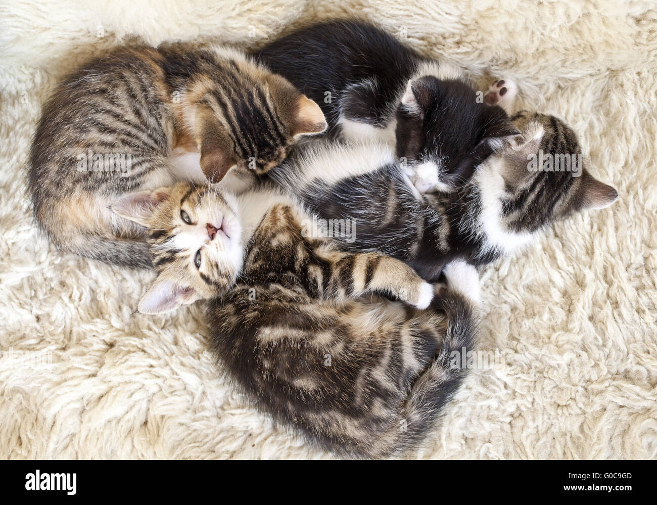 four tired kittens cuddling up - Stock Image