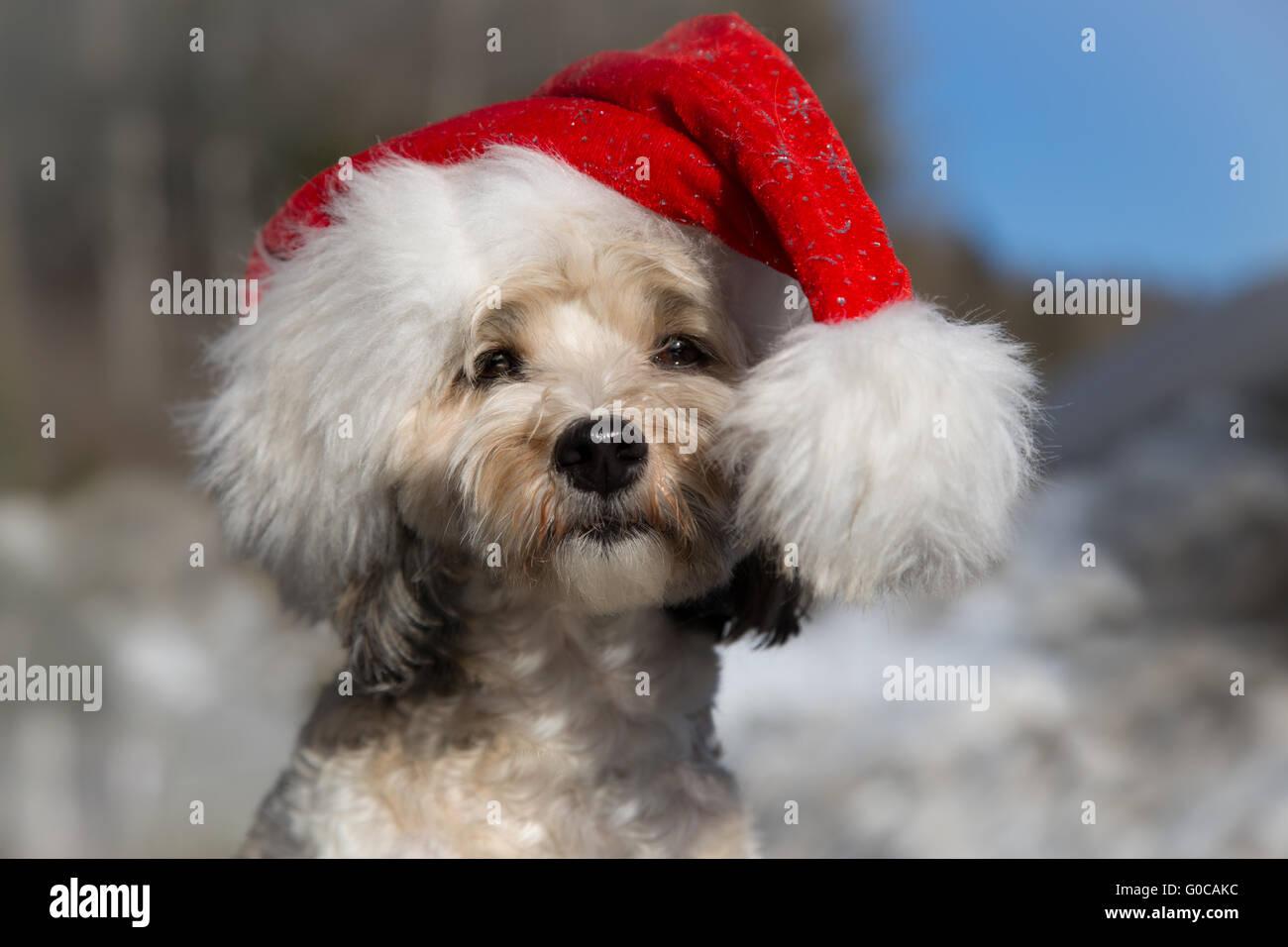 Santa Dog - Stock Image