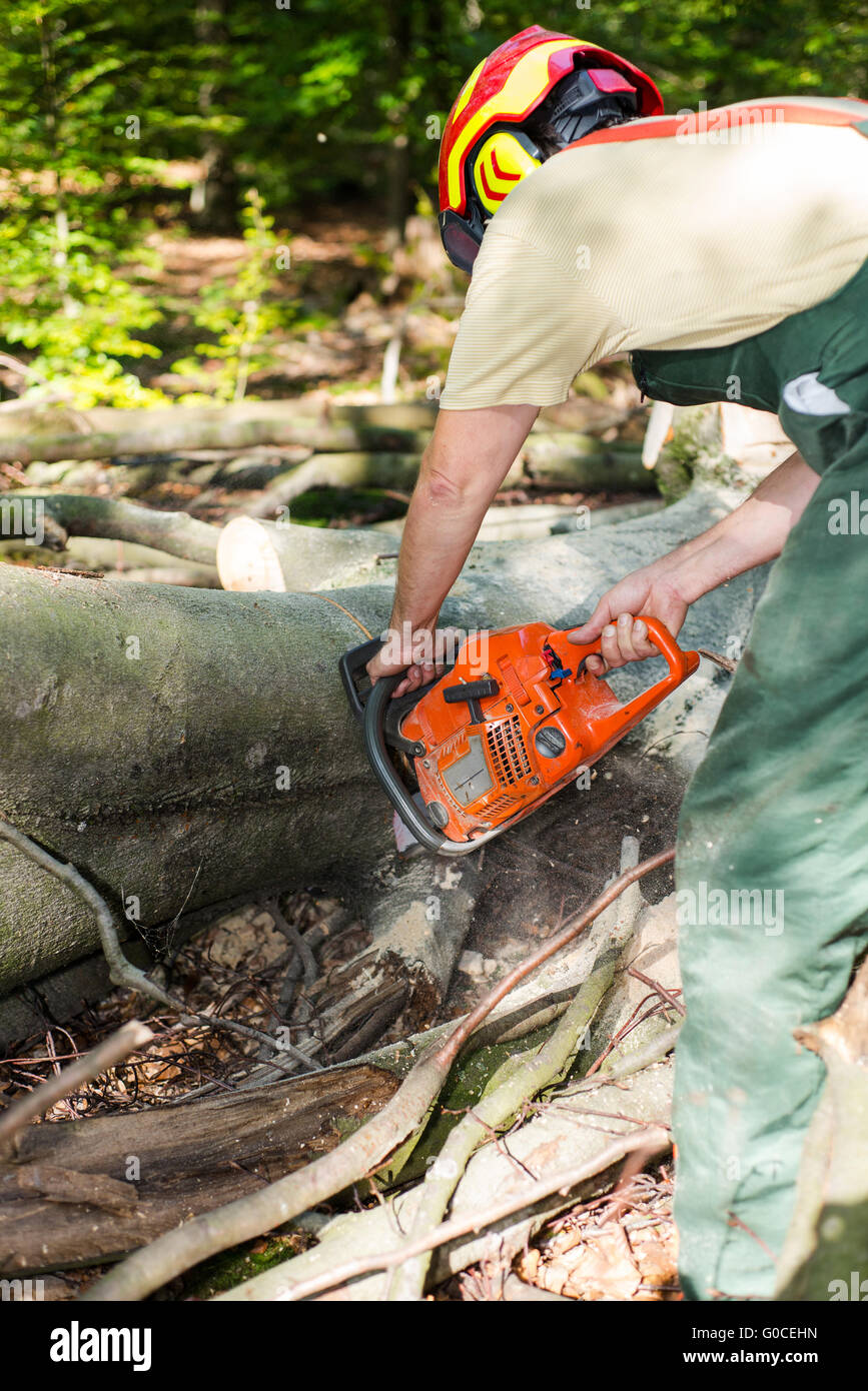 lumberjack with hardhat sawing wood in forest Stock Photo