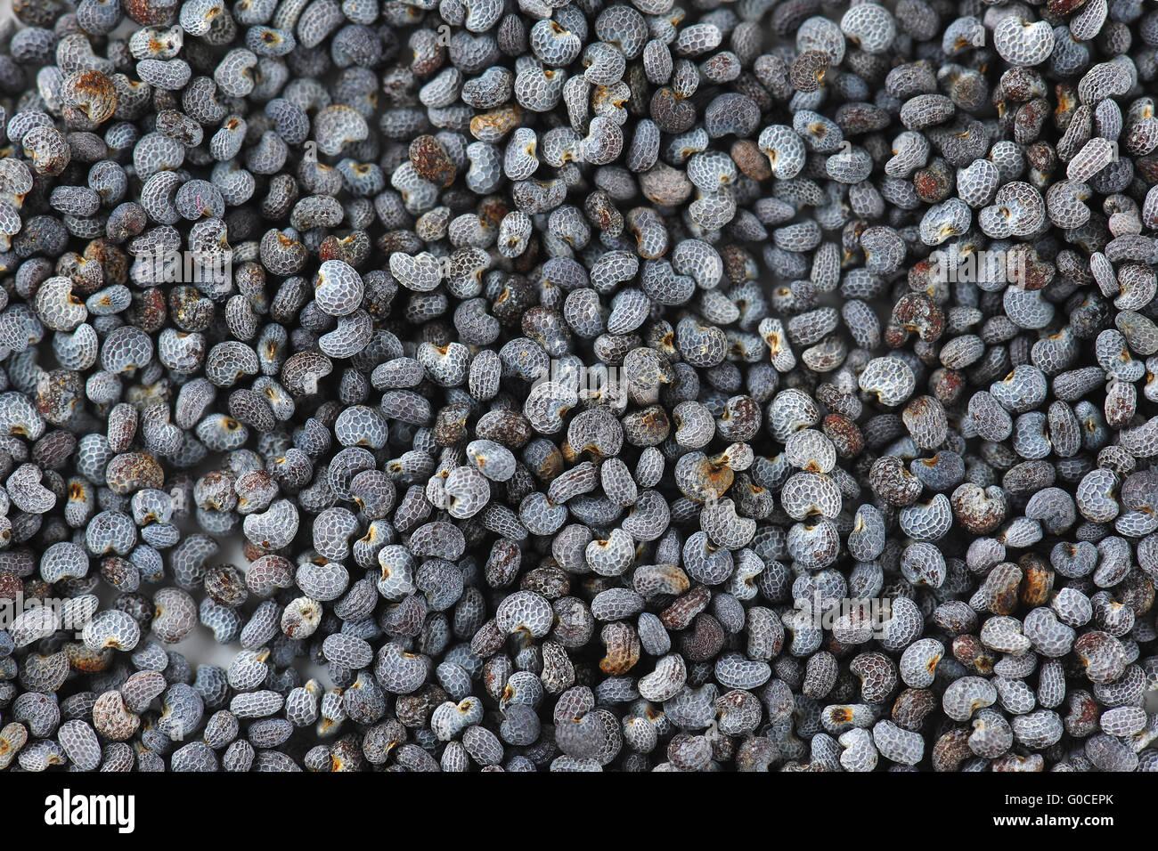 detail of poppy seeds - full frame - Stock Image