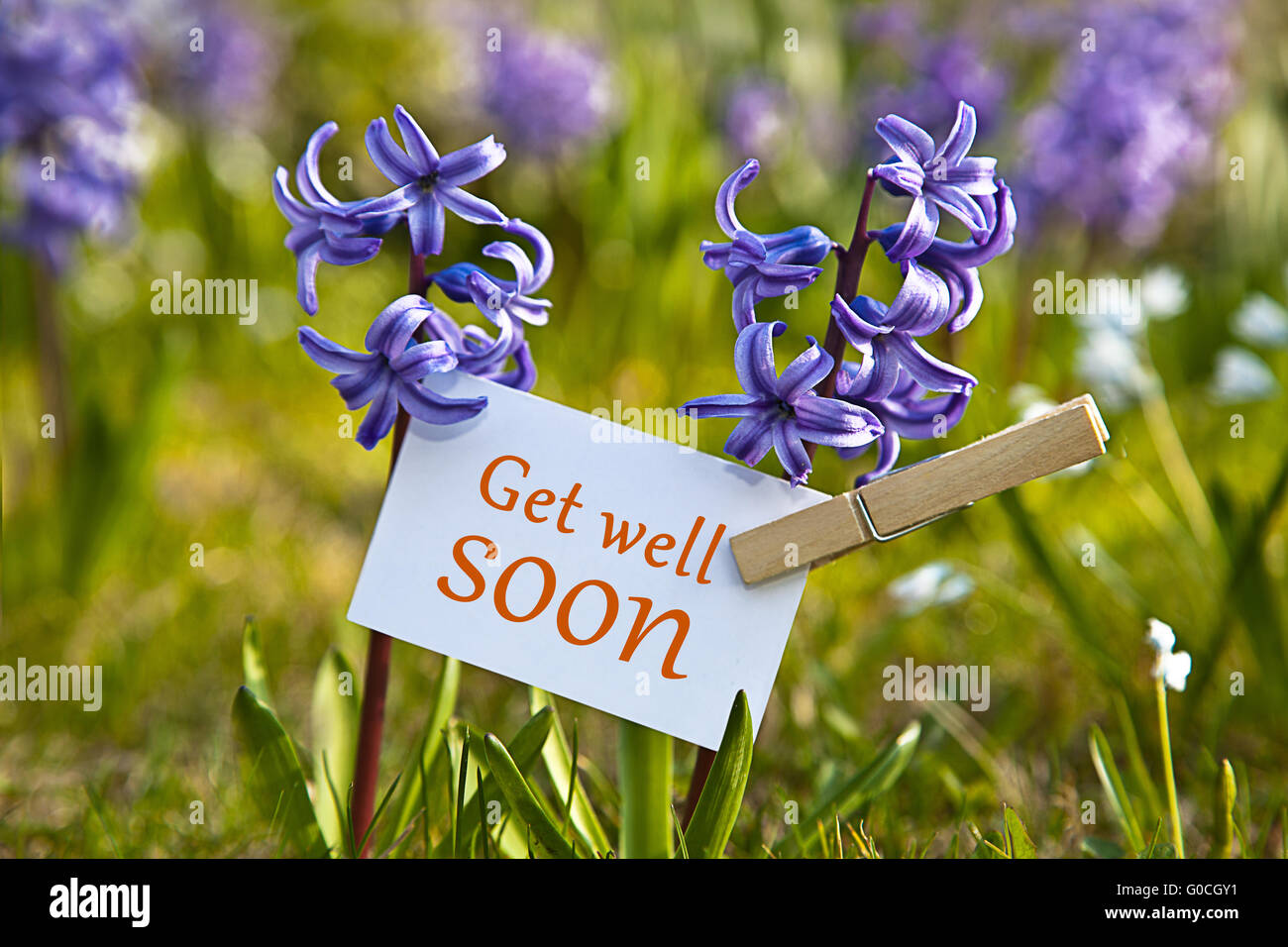 the words get well soon with hyacinths