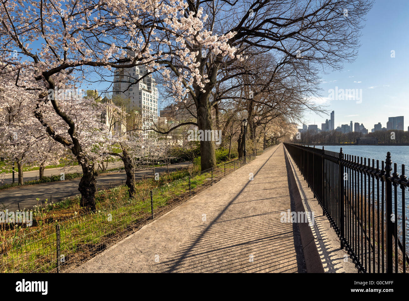 Spring in Central Park on the Shuman Running Track with Yoshino Cherry trees in bloom. Upper East Side, Manhattan, - Stock Image