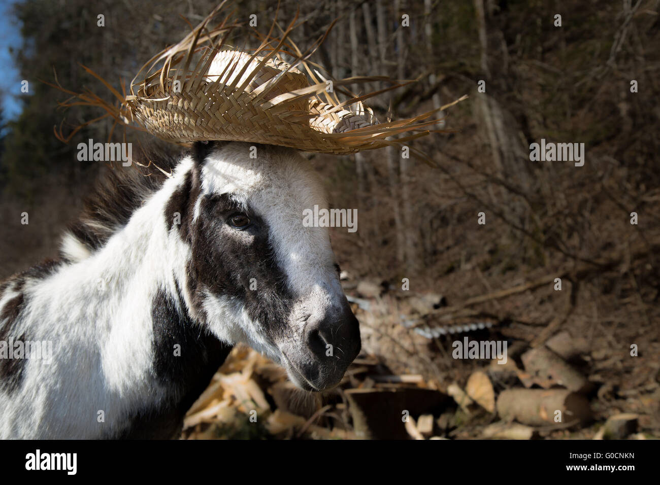Donkey with Summer Hat - Stock Image