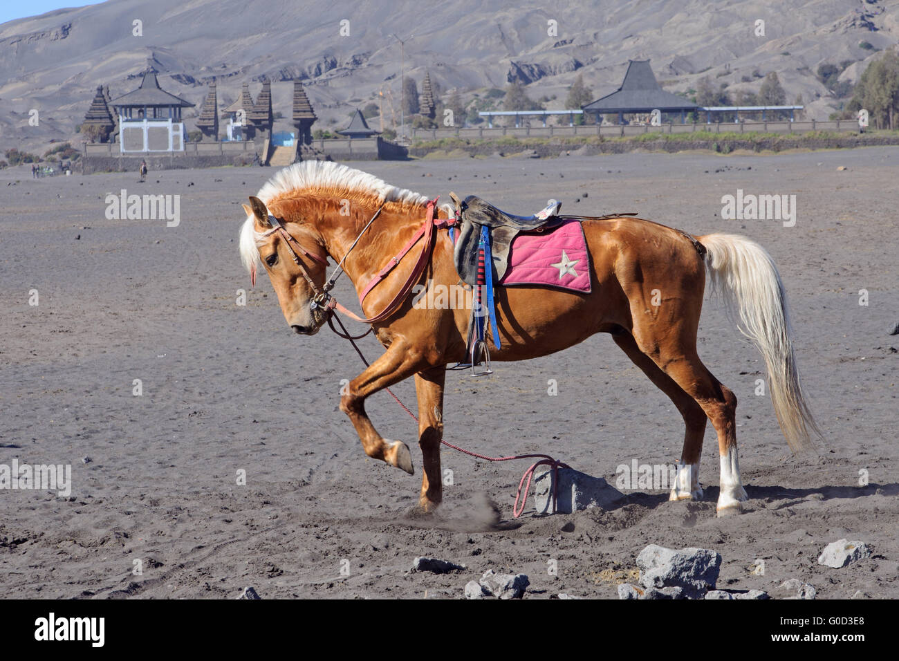 Horse at the foothills of Bromo volcano - Stock Image